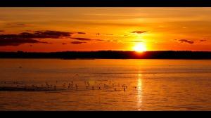 sunset-birds1
