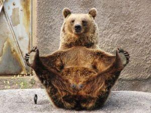 Bear_Upvistha